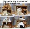 catch-box-624.jpg