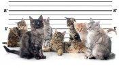 cats-catnip-arrests-small.jpg